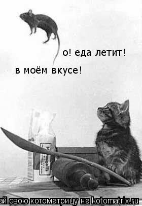 Котоматрица: о! еда летит! в моём вкусе!