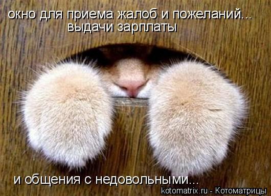 Котоматрица: окно для приема жалоб и пожеланий... выдачи зарплаты и общения с недовольными...