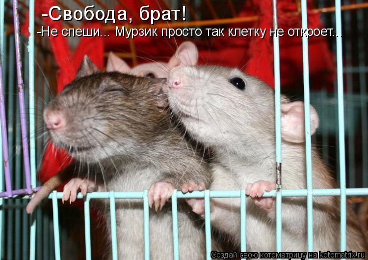 Котоматрица: -Свобода, брат! -Не спеши... Мурзик просто так клетку не откроет...