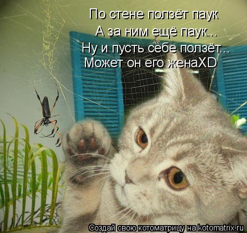 Котоматрица: По стене ползёт паук А за ним ещё паук... Ну и пусть себе ползёт... Может он его женаХD