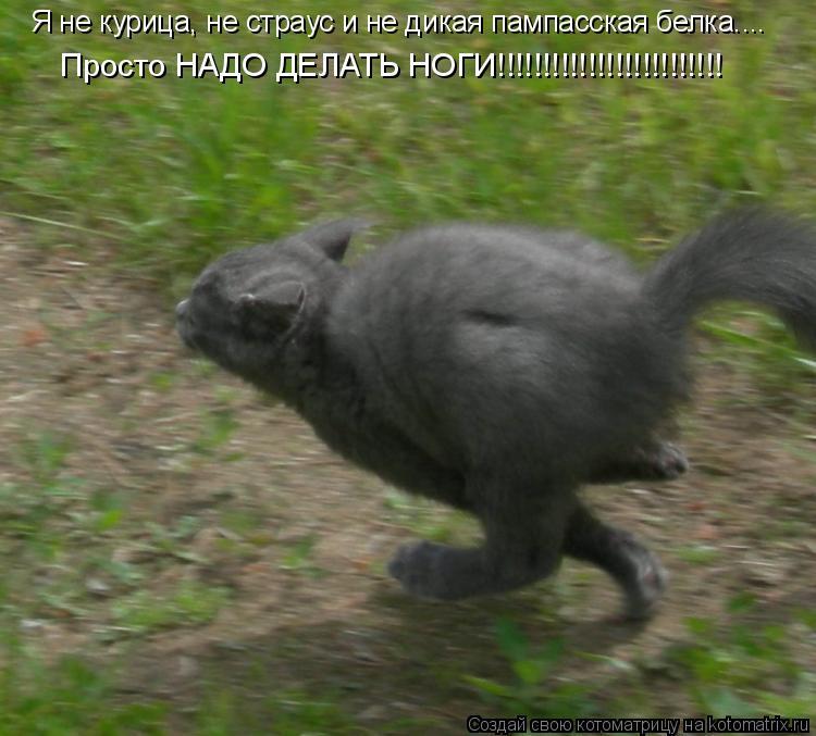 Котоматрица: Я не курица, не страус и не дикая пампасская белка....  Просто НАДО ДЕЛАТЬ НОГИ!!!!!!!!!!!!!!!!!!!!!!!!!