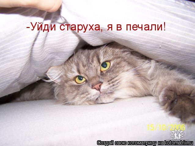 Котоматрица: -Уйди старуха, я в печали!