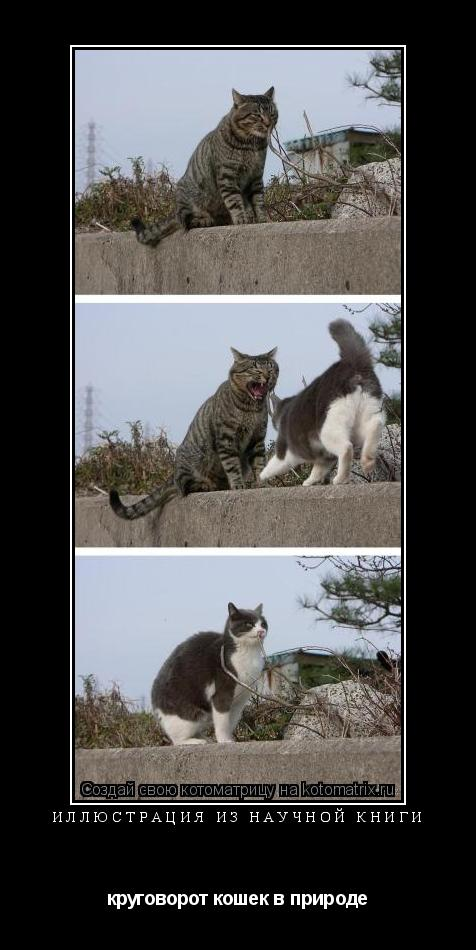 Котоматрица: ИЛЛЮСТРАЦИЯ ИЗ НАУЧНОЙ КНИГИ круговорот кошек в природе