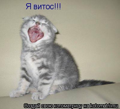 Котоматрица: Я витос!!!