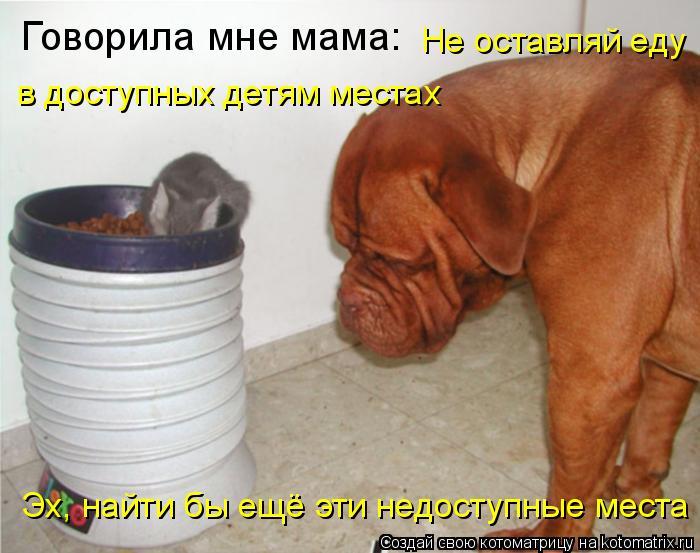 Котоматрица: Говорила мне мама:  Не оставляй еду  в доступных детям местах Эх, найти бы ещё эти недоступные места