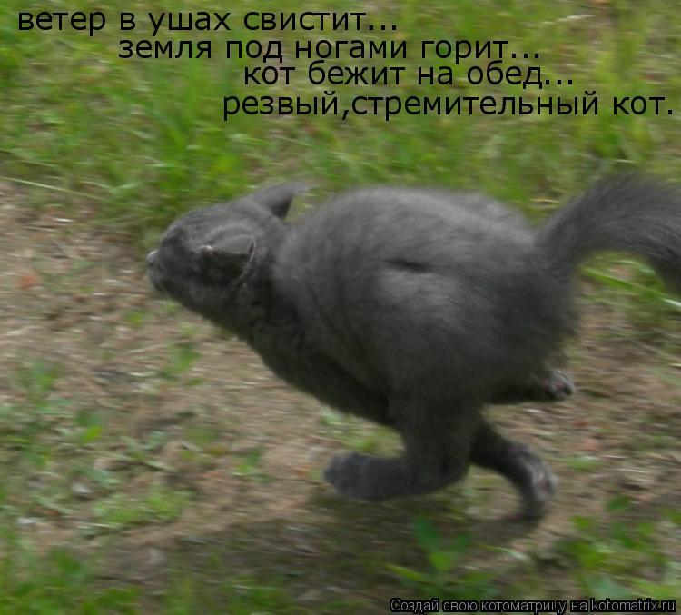 Котоматрица: ветер в ушах свистит... земля под ногами горит... кот бежит на обед... резвый,стремительный кот.