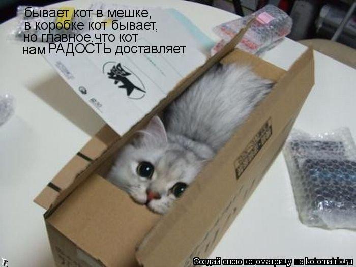 Котоматрица: бывает кот в мешке, в коробке кот бывает, но главное,что кот нам  РАДОСТЬ доставляет