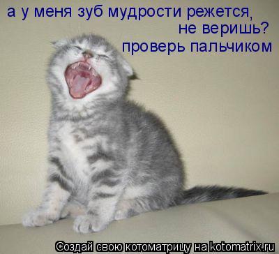 Котоматрица: а у меня зуб мудрости режется не веришь? проверь пальчиком ,