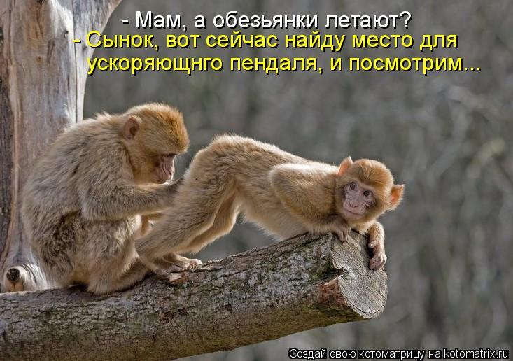 Котоматрица: - Мам, а обезьянки летают? - Сынок, вот сейчас найду место для  ускоряющнго пендаля, и посмотрим...