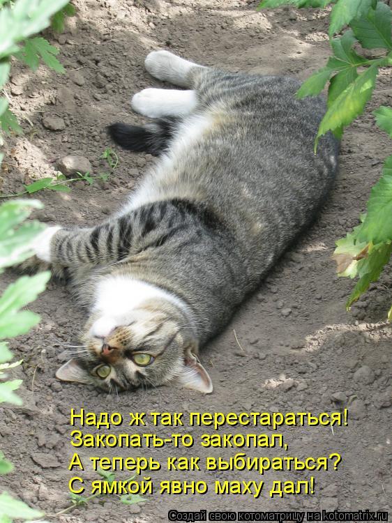 Котоматрица: Закопать-то закопал, А теперь как выбираться? С ямкой явно маху дал! Надо ж так перестараться!