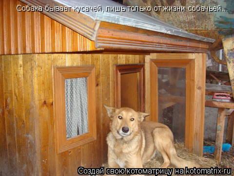 Котоматрица: Собака бывает кусачей, лишь только от жизни собачьей...
