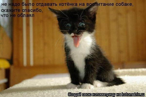 Котоматрица: не надо было отдавать котёнка на воспитание собаке, скажите спасибо, что не облаял