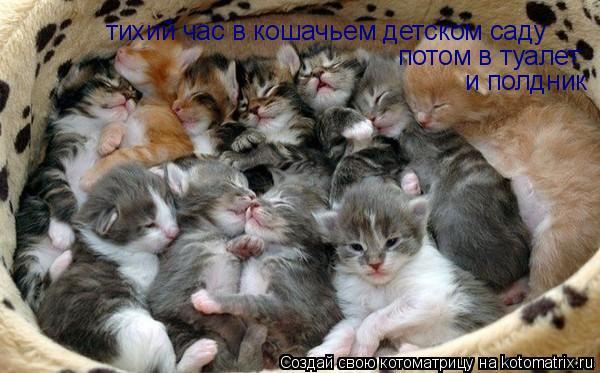 Котоматрица: тихий час в кошачьем детском саду потом в туалет и полдник