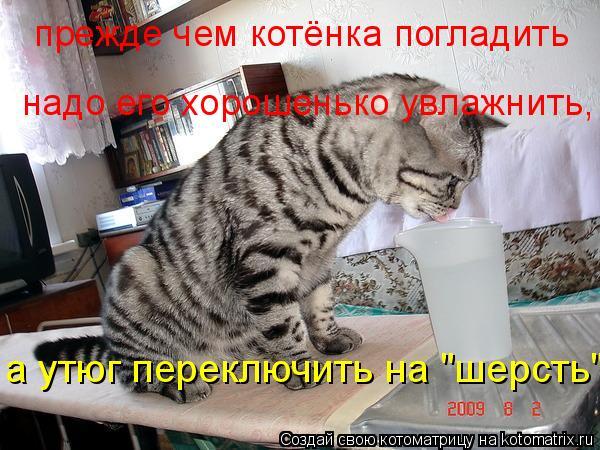 """Котоматрица: прежде чем котёнка погладить надо его хорошенько увлажнить, а утюг переключить на """"шерсть"""""""