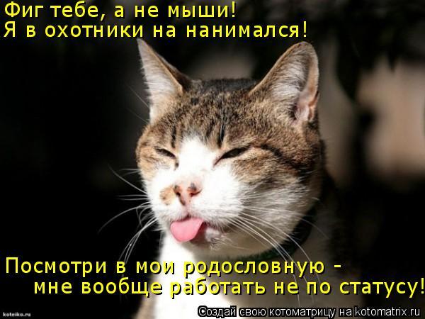 Котоматрица: Фиг тебе, а не мыши! Я в охотники на нанимался! Посмотри в мои родословную -  мне вообще работать не по статусу!