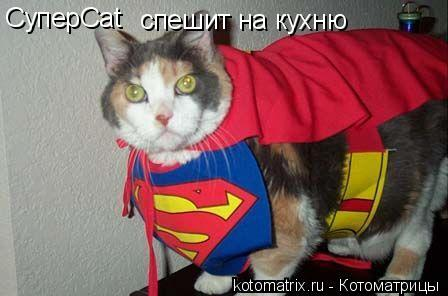 Котоматрица: СуперCat спешит на кухню