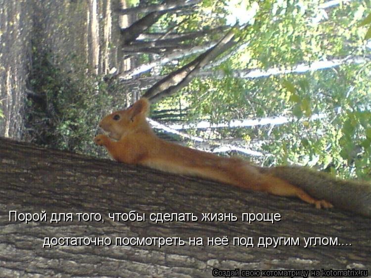Котоматрица: Порой для того, чтобы сделать жизнь проще  достаточно посмотреть на неё под другим углом....
