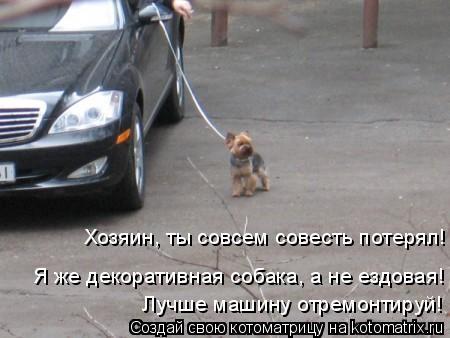 Котоматрица: Хозяин, ты совсем совесть потерял! Я же декоративная собака, а не ездовая! Лучше машину отремонтируй!