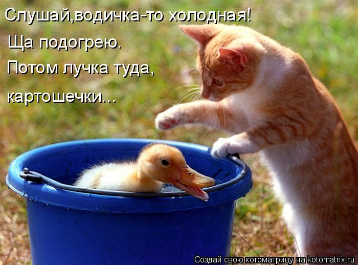 Котоматрица: Слушай,водичка-то холодная! Ща подогрею.  Потом лучка туда, картошечки...