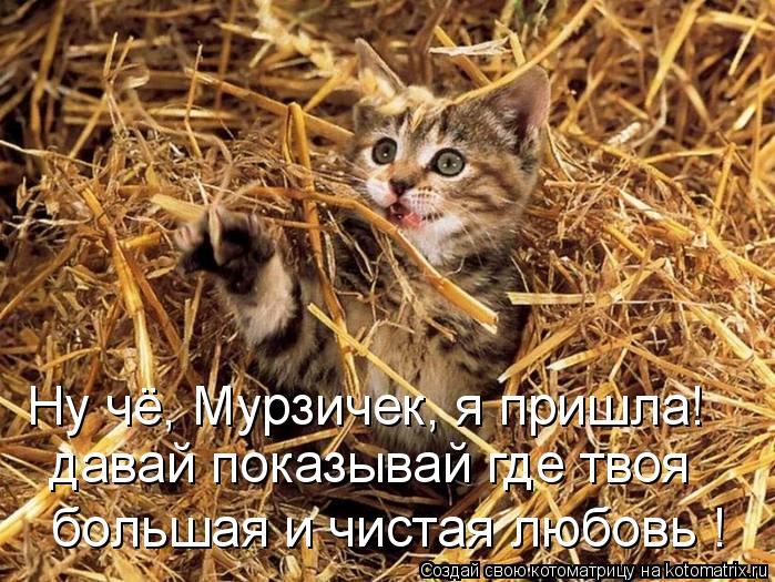 Котоматрица: Ну чё, Мурзичек, я пришла! давай показывай где твоя  большая и чистая любовь !