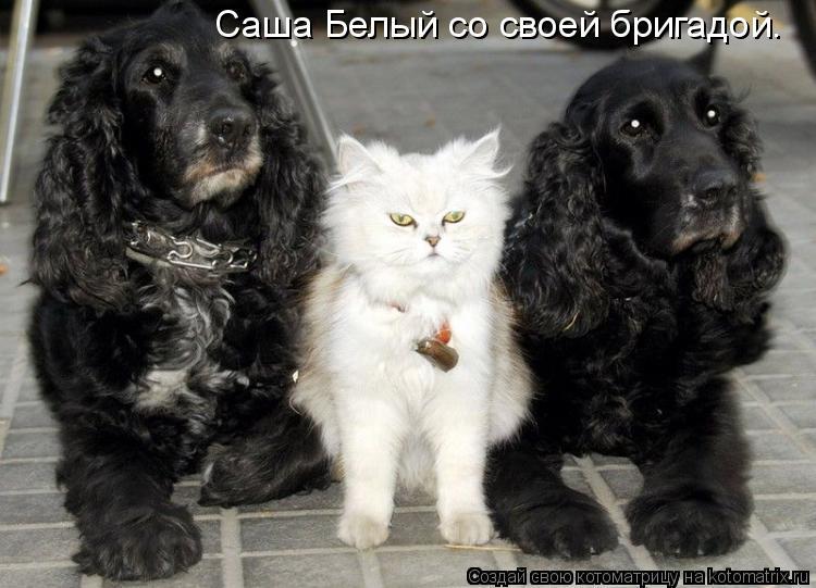 Котоматрица: Саша Белый со своей бригадой.