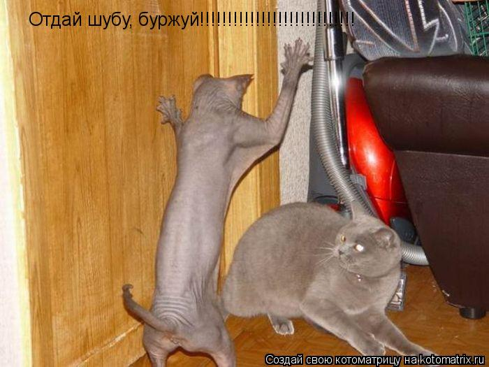 Котоматрица: Отдай шубу, буржуй!!!!!!!!!!!!!!!!!!!!!!!!!!!!