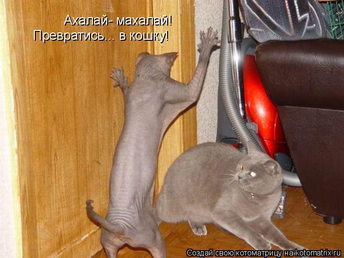 Котоматрица: Ахалай- махалай! Превратись... в кошку!