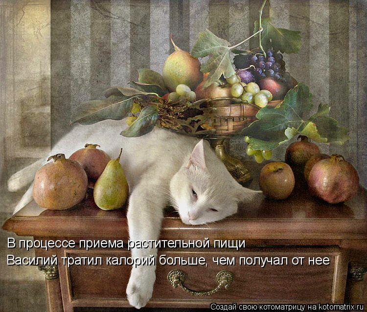 Котоматрица: В процессе приема растительной пищи Василий тратил калорий больше, чем получал от нее