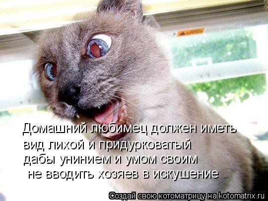 Котоматрица: Домашний любимец должен иметь вид лихой и придурковатый дабы унинием и умом своим не вводить хозяев в искушение
