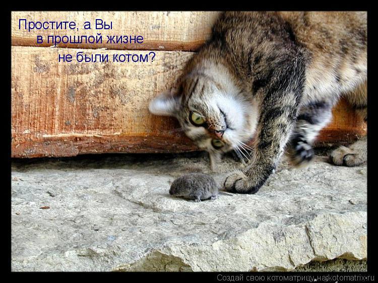 Котоматрица: Простите, а Вы в прошлой жизне не были котом?