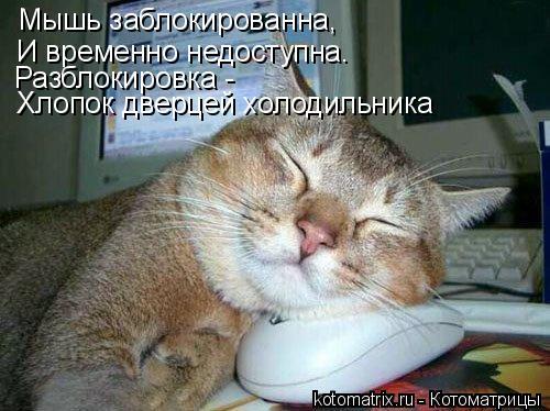 Котоматрица: Мышь заблокированна, И временно недоступна. Разблокировка - Хлопок дверцей холодильника