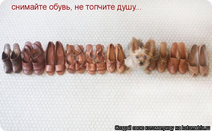 Котоматрица: снимайте обувь, не топчите душу...