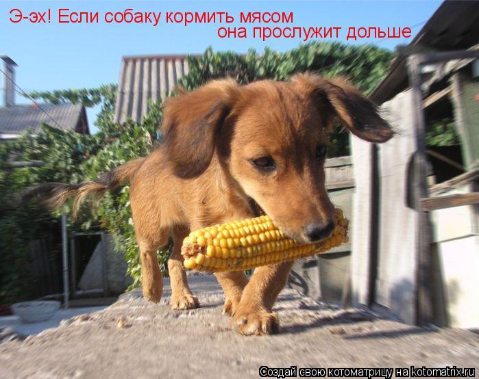Котоматрица: Э-эх! Если собаку кормить мясом она прослужит дольше