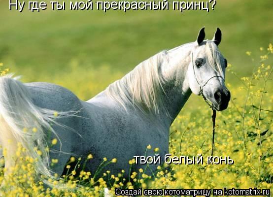 Котоматрица: Ну где ты мой прекрасный принц?  твой белый конь