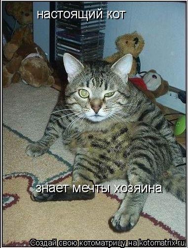 Котоматрица: настоящий кот  знает мечты хозяина