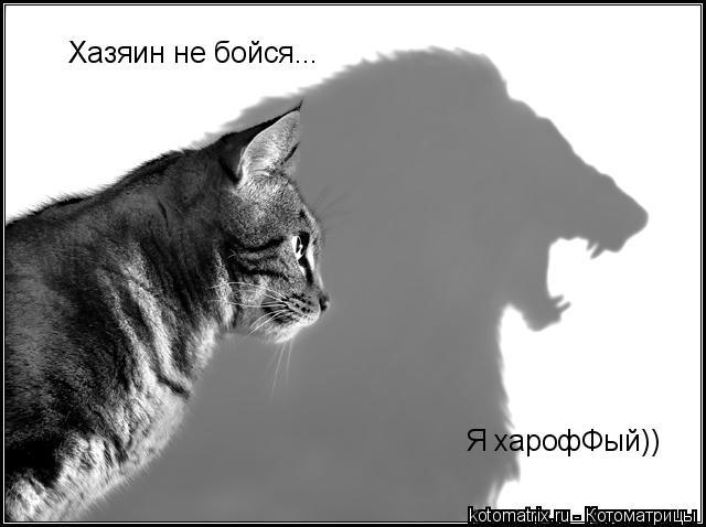 Котоматрица: Хазяин не бойся...  Я харофФый))