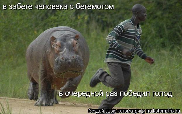 Котоматрица: в забеге человека с бегемотом в очередной раз победил голод.