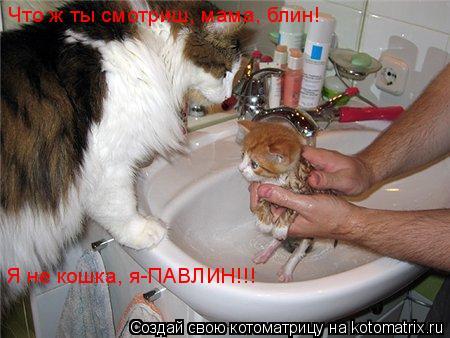 Котоматрица: Что ж ты смотриш, мама, блин!  Я не кошка, я-ПАВЛИН!!!