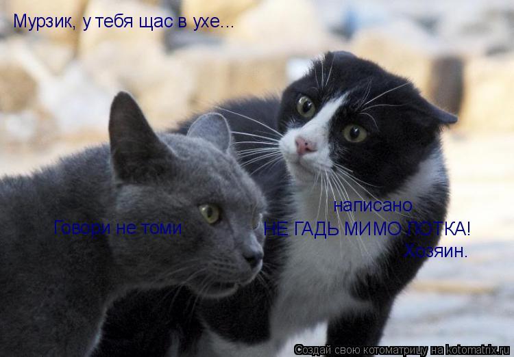 Котоматрица: Говори не томи написано НЕ ГАДЬ МИМО ЛОТКА! Мурзик, у тебя щас в ухе...  Хозяин.