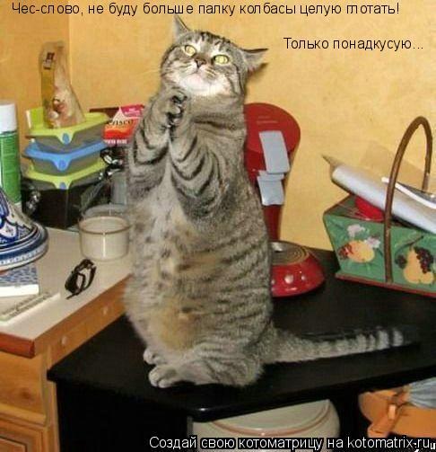 Котоматрица: Чес-слово, не буду больше палку колбасы целую глотать! Только понадкусую...