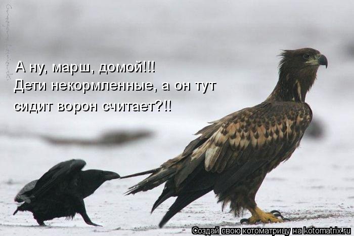 Котоматрица: А ну, марш, домой!!!  Дети некормленные, а он тут сидит ворон считает?!!