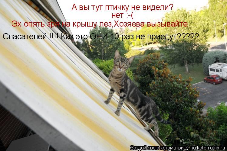 Котоматрица: А вы тут птичку не видели? нет :-( Эх опять зря на крышу лез,Хозяева вызывайте  Спасателей !!!! Как это ОНИ 10 раз не приедут?????