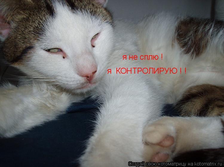 Котоматрица: я не сплю ! я  КОНТРОЛИРУЮ ! !