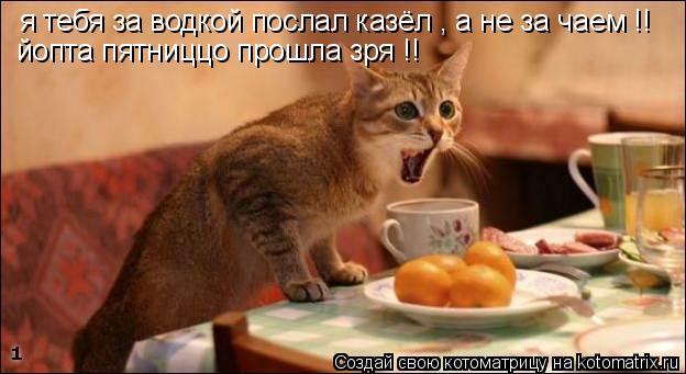 Котоматрица: я тебя за водкой послал казёл , а не за чаем !! йопта пятниццо прошла зря !!
