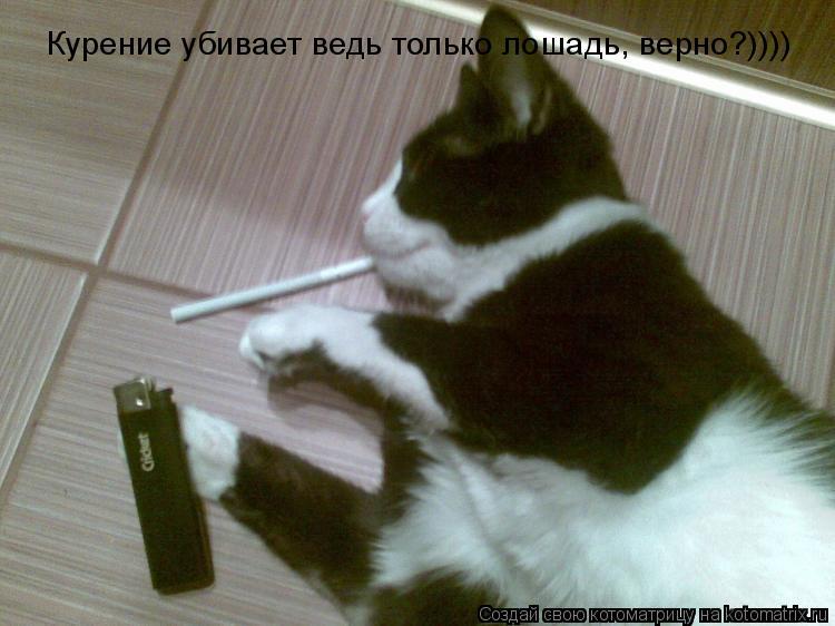Котоматрица: Курение убивает ведь только лошадь, верно?))))