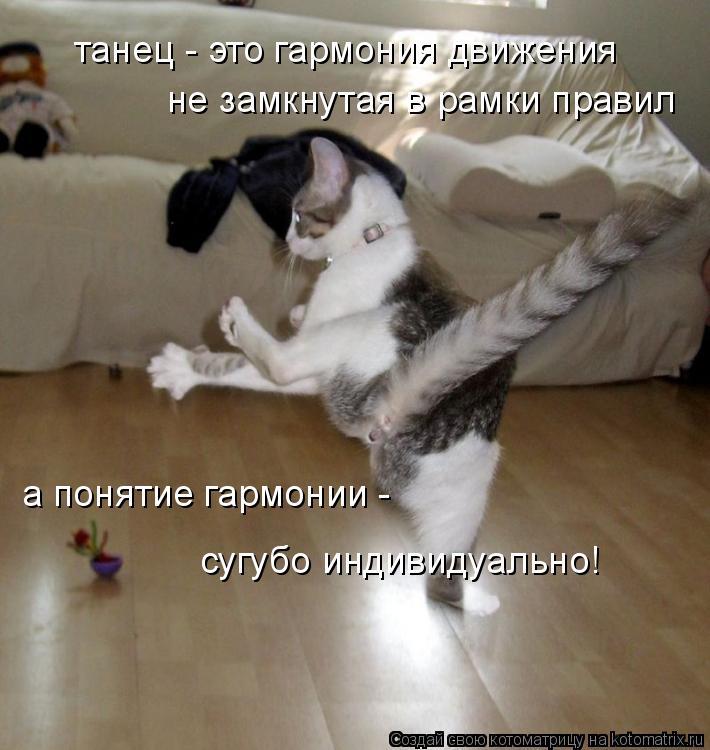 Котоматрица: танец - это гармония движения не замкнутая в рамки правил а понятие гармонии -  сугубо индивидуально!