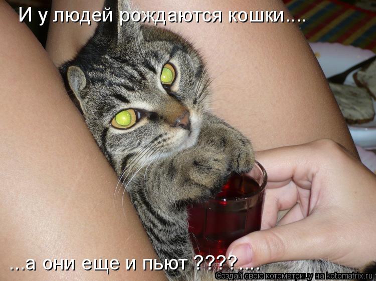 Котоматрица: И у людей рождаются кошки.... ...а они еще и пьют ????....