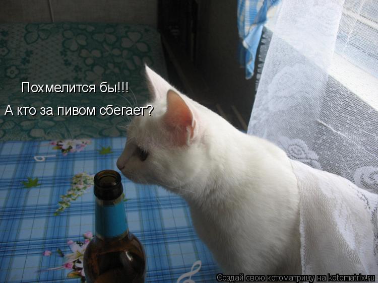 Котоматрица: Похмелится бы!!! А кто за пивом сбегает?