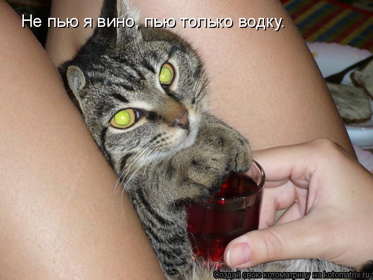 Котоматрица: Не пью я вино, пью только водку.