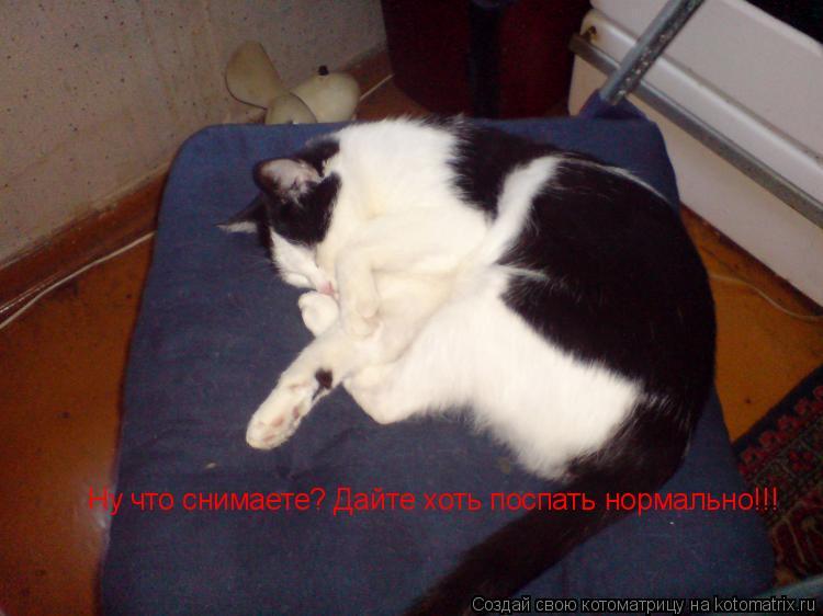 Котоматрица: Ну что снимаете? Дайте хоть поспать нормально!!!